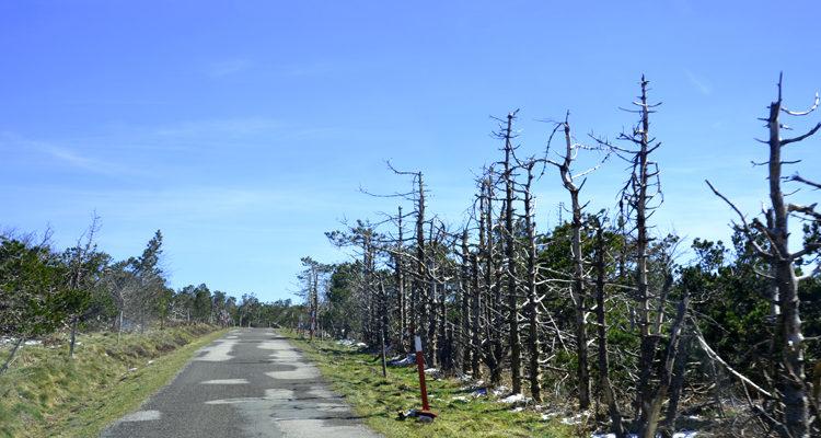 NORE-arbres
