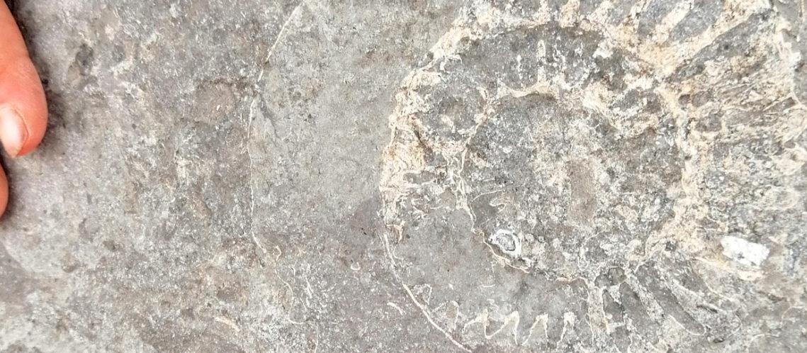 bandeau-fossile