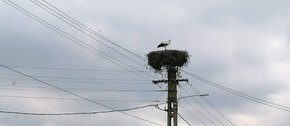 bandeau-cigogne-confinee