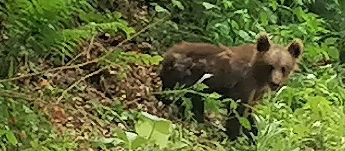 bandeau-ours