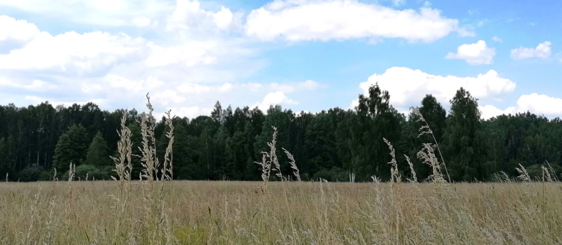 bandeau-bialowieza-02