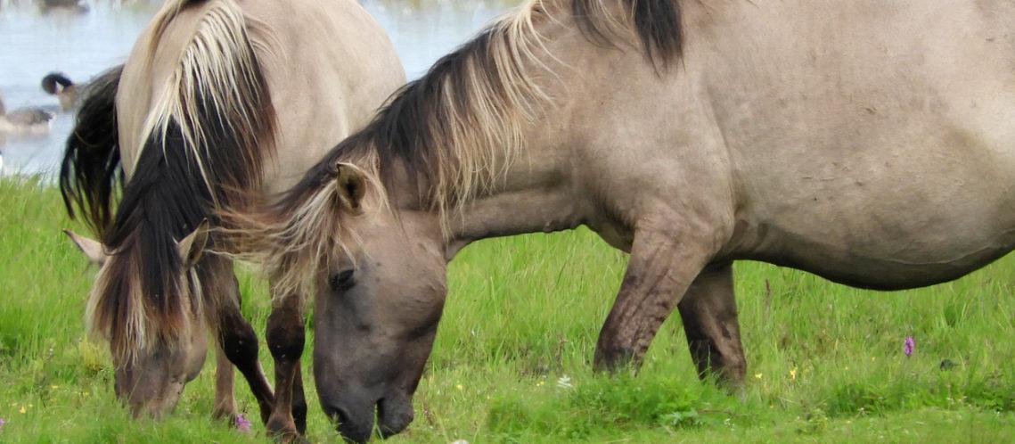 bandeau-chevaux-engures