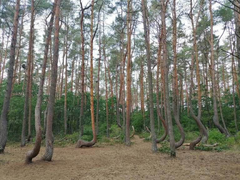 foret-tordue-07